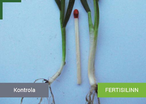 Fertisilinn_leaflet_picture_1