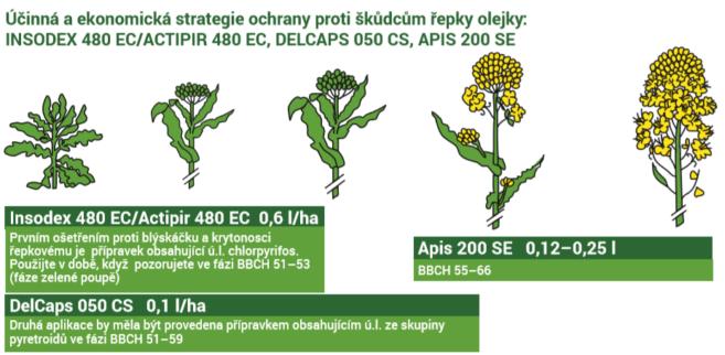 Insekticidy_OSR
