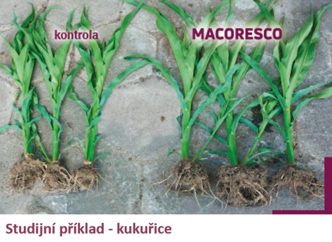 Macoresco_corn